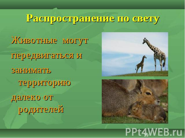 Животные могут Животные могут передвигаться и занимать территорию далеко от родителей