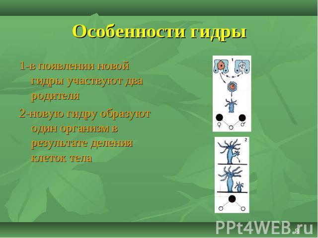 1-в появлении новой гидры участвуют два родителя 1-в появлении новой гидры участвуют два родителя 2-новую гидру образуют один организм в результате деления клеток тела