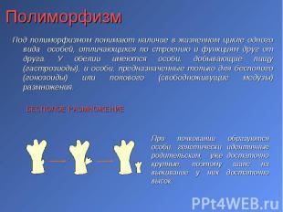 Под полиморфизмом понимают наличие в жизненном цикле одного вида особей, отличаю