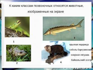 К каким классам позвоночных относятся животные, изображенные на экране