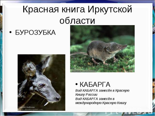 Красная книга Иркутской области БУРОЗУБКА