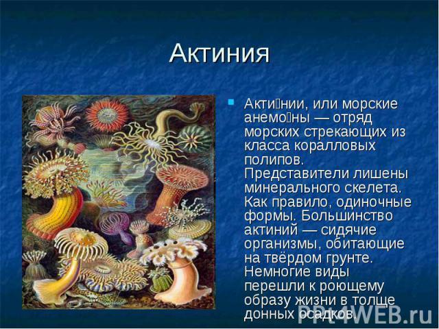 Акти нии, или морские анемо ны — отряд морских стрекающих из класса коралловых полипов. Представители лишены минерального скелета. Как правило, одиночные формы. Большинство актиний — сидячие организмы, обитающие на твёрдом грунте. Немногие виды пере…