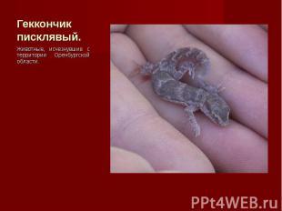Животные, исчезнувшие с территории Оренбургской области. Животные, исчезнувшие с