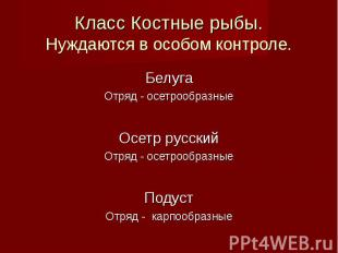Белуга Белуга Отряд - осетрообразные Осетр русский Отряд - осетрообразные Подуст