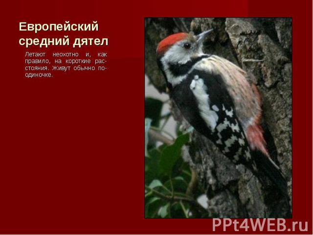 Летают неохотно и, как правило, на короткие рас-стояния. Живут обычно по-одиночке. Летают неохотно и, как правило, на короткие рас-стояния. Живут обычно по-одиночке.