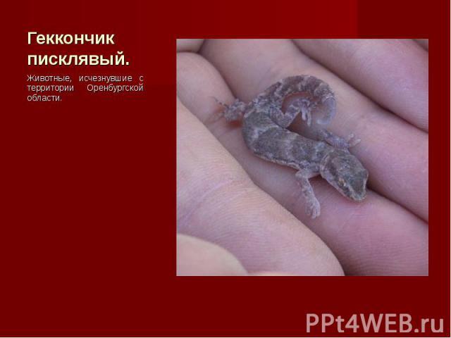 Животные, исчезнувшие с территории Оренбургской области. Животные, исчезнувшие с территории Оренбургской области.