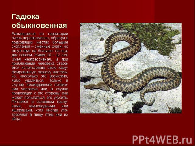 Размещается по территории очень неравномерно, образуя в подходящих местах большие скопления – змеиные очаги, но отсутствуя на больших площа-дях совсем. Живет 10 – 12 лет. Змея неагрессивная, и при приближении человека стара-ется использовать свою ка…