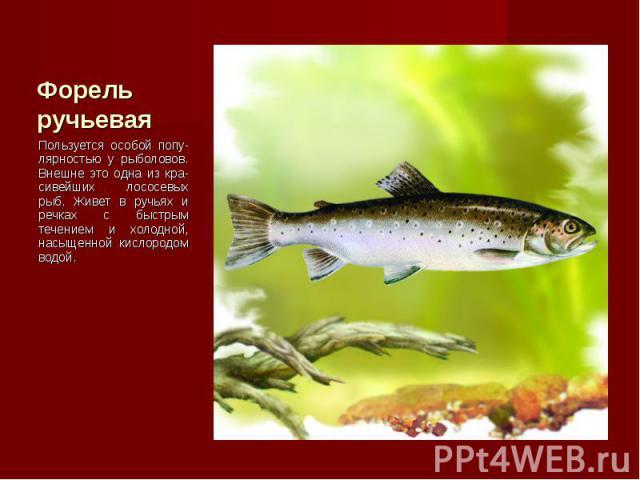 Пользуется особой попу-лярностью у рыболовов. Внешне это одна из кра-сивейших лососевых рыб. Живет в ручьях и речках с быстрым течением и холодной, насыщенной кислородом водой. Пользуется особой попу-лярностью у рыболовов. Внешне это одна из кра-сив…