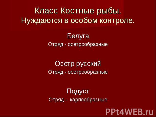 Белуга Белуга Отряд - осетрообразные Осетр русский Отряд - осетрообразные Подуст Отряд - карпообразные