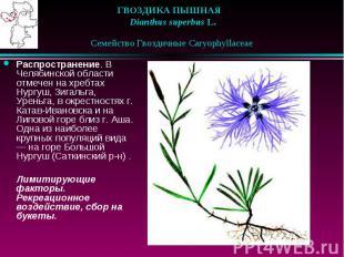 ГВОЗДИКА ПЫШНАЯ  Dianthus superbus L.  Семейство Гвоздич