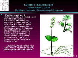 ТАЙНИК СЕРДЦЕВИДНЫЙ  Listera cordata (L.) R.Br.  Семейст