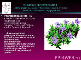 СМОЛЕВКА БЕССТЕБЕЛЬНАЯ  Silene acaulis (L.) Jacq. (=Xamilenis acauli