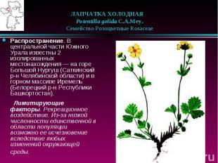 ЛАПЧАТКА ХОЛОДНАЯ  Potentilla gelida C.A.Mey.  Семейство