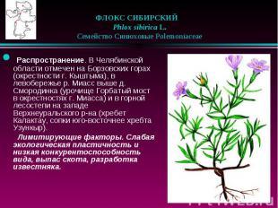ФЛОКС СИБИРСКИЙ Phlox sibirica L.  Семейство Синюх