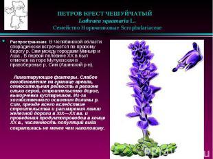 ПЕТРОВ КРЕСТ ЧЕШУЙЧАТЫЙ  Lathraea squamaria L.  Семейств