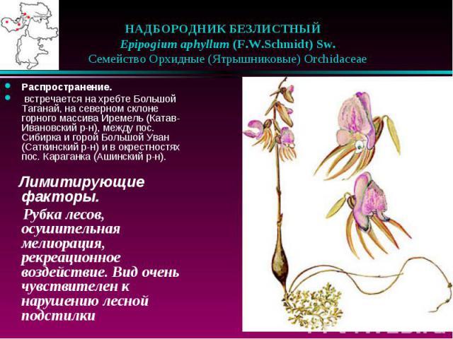 НАДБОРОДНИК БЕЗЛИСТНЫЙ  Epipogium aphyllum (F.W.Schmidt) Sw.  Семейство Орхидные (Ятрышниковые) Orchidaceae Распространение. встречается на хребте Большой Таганай, на северном склоне горного массива Иремель (Катав-Ивановский …