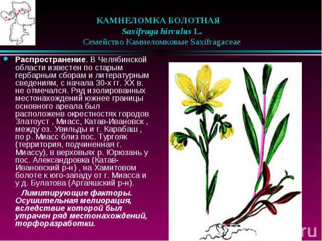 КАМНЕЛОМКА БОЛОТНАЯ  Saxifraga hirculus L.  Семейство Камнеломковые Saxifragaceae Распространение. В Челябинской области известен по старым гербарным сборам и литературным сведениям, с начала 30-х гг. XX в. не отмечался. Ряд …