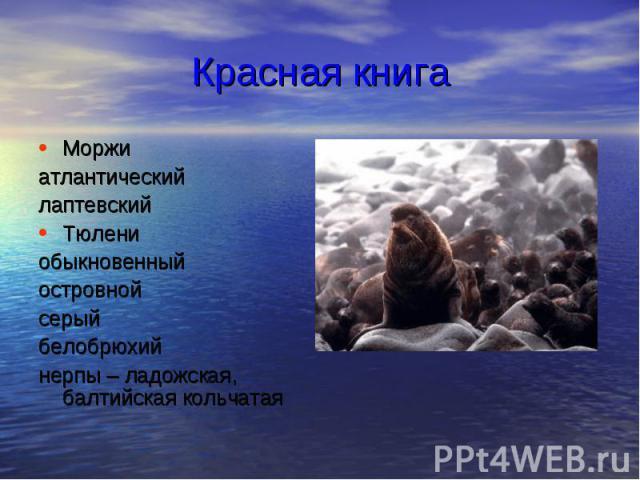 Красная книга Моржи атлантический лаптевский Тюлени обыкновенный островной серый белобрюхий нерпы – ладожская, балтийская кольчатая