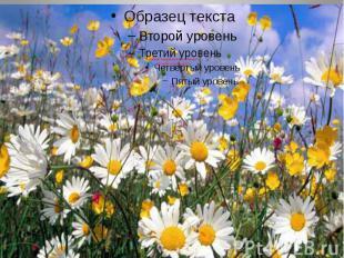 Лекарственные растения Алтайского края 2014г.