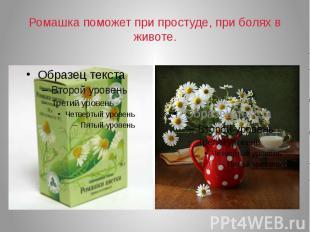 Ромашка поможет при простуде, при болях в животе.