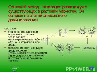 Основной метод - активация развития уже существующих в растении меристем. Он осн