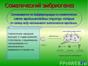 Соматический эмбриогенез