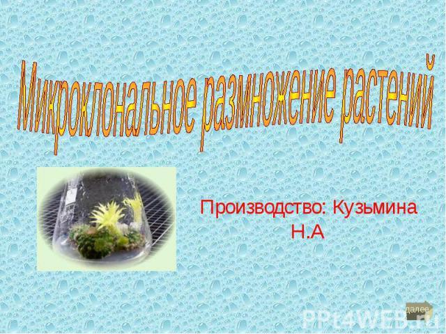 Производство: Кузьмина Н.А
