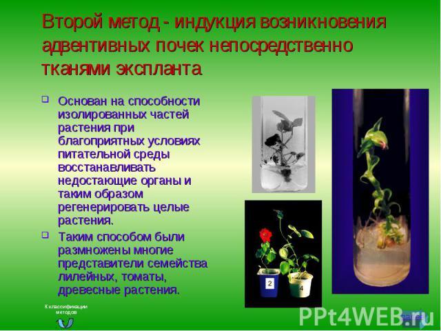 Второй метод - индукция возникновения адвентивных почек непосредственно тканями экспланта Основан на способности изолированных частей растения при благоприятных условиях питательной среды восстанавливать недостающие органы и таким образом регенериро…