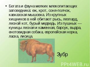 Богата и фауна мелких млекопитающих заповедника: еж, крот, соня-полчок, кавказск