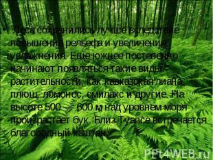 Леса сохранились лучше вследствие повышения рельефа и увеличения увлажнения. Еще