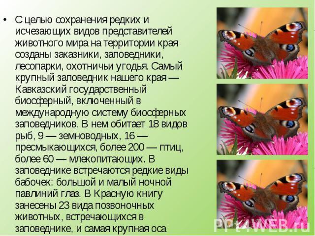 С целью сохранения редких и исчезающих видов представителей животного мира на территории края созданы заказники, заповедники, лесопарки, охотничьи угодья. Самый крупный заповедник нашего края — Кавказский государственный биосферный, включенный в меж…