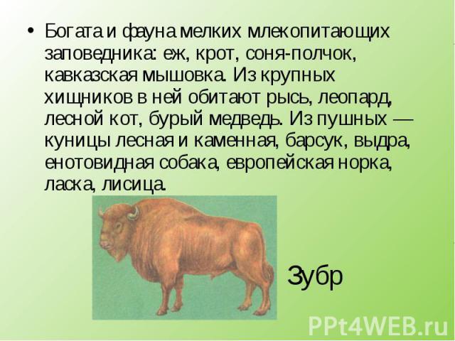 Богата и фауна мелких млекопитающих заповедника: еж, крот, соня-полчок, кавказская мышовка. Из крупных хищников в ней обитают рысь, леопард, лесной кот, бурый медведь. Из пушных — куницы лесная и каменная, барсук, выдра, енотовидная собака, европейс…