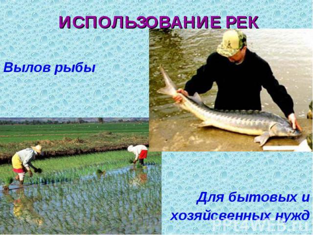Вылов рыбы Вылов рыбы Для бытовых и хозяйсвенных нужд
