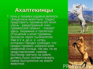 Ахалтекинцы Конь у туркмен издавна являлся священным животным. Трудно представит