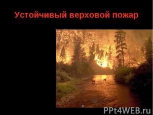 Средняя скорость продвижения фронта пожара 5—15 м/мин. Верховые устойчивые пожар