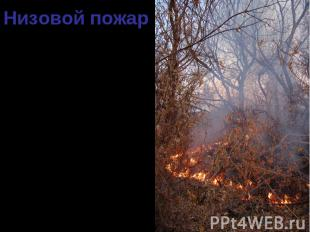 90 % всех случаев лесных пожаров – низовые. 90 % всех случаев лесных пожаров – н