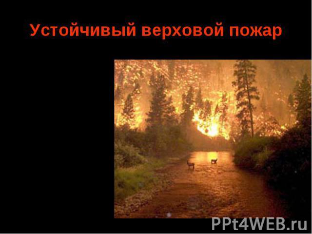 Средняя скорость продвижения фронта пожара 5—15 м/мин. Верховые устойчивые пожары обладают наибольшей разрушительной силой, они приводят к полной гибели леса. Средняя скорость продвижения фронта пожара 5—15 м/мин. Верховые устойчивые пожары обладают…