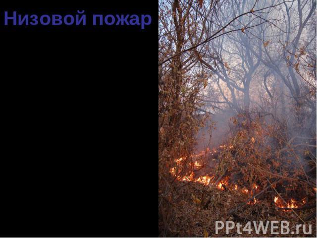 90 % всех случаев лесных пожаров – низовые. 90 % всех случаев лесных пожаров – низовые. Распространяются по нижнему ярусу леса. Пламя достигает высоты 5-50 см. Скорость распространения 0,5-3 м/мин.