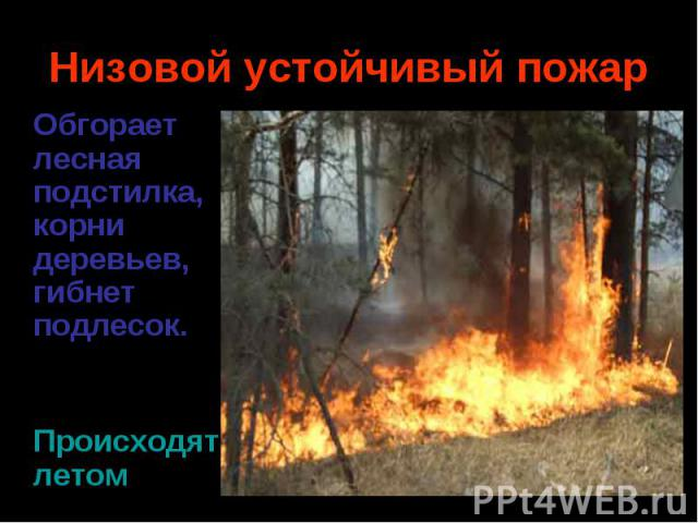 Обгорает лесная подстилка, корни деревьев, гибнет подлесок. Обгорает лесная подстилка, корни деревьев, гибнет подлесок. Происходятлетом