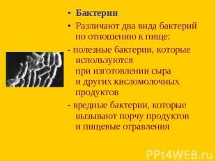 Бактерии Бактерии Различают два вида бактерий поотношению кпище: - п