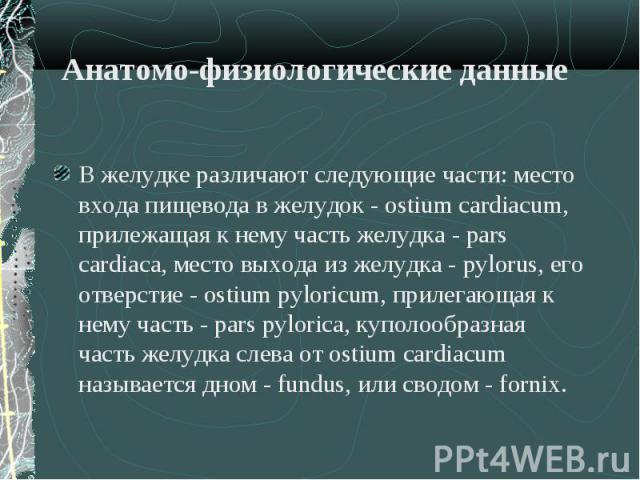 В желудке различают следующие части: место входа пищевода в желудок - ostium cardiacum, прилежащая к нему часть желудка - pars cardiaca, место выхода из желудка - pylorus, его отверстие - ostium pyloricum, прилегающая к нему часть - pars pylorica, к…