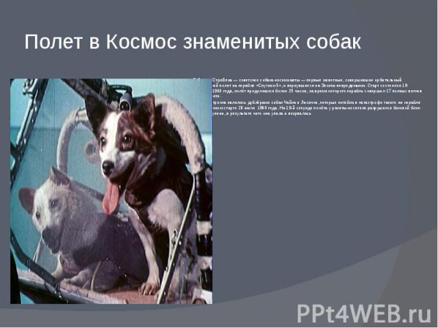Полет в Космос знаменитых собак Бе лка и Стре лка—советские собаки-космонавты— первые животные, совершившиеорбитальный космический полетна корабле «Спутник-5», и вернувшиеся наЗемлюневредимыми. Старт состоял…