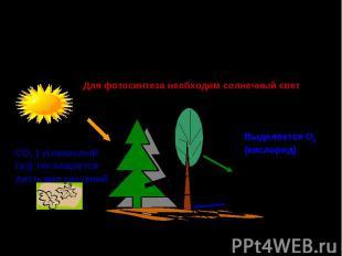Роль зелёных растений в поддержании постоянного газового состава атмосферы и обе