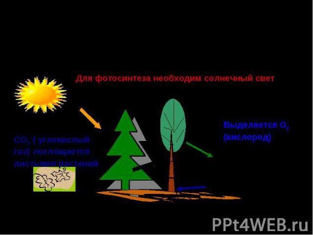 Роль зелёных растений в поддержании постоянного газового состава атмосферы и обеспечении кислородом и органическими веществами всех живых организмов