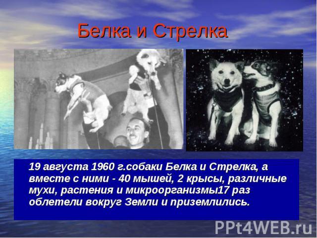19 августа 1960 г.собаки Белка и Стрелка, а вместе с ними - 40 мышей, 2 крысы, различные мухи, растения и микроорганизмы17 раз облетели вокруг Земли и приземлились. 19 августа 1960 г.собаки Белка и Стрелка, а вместе с ними - 40 мышей, 2 крысы, разли…