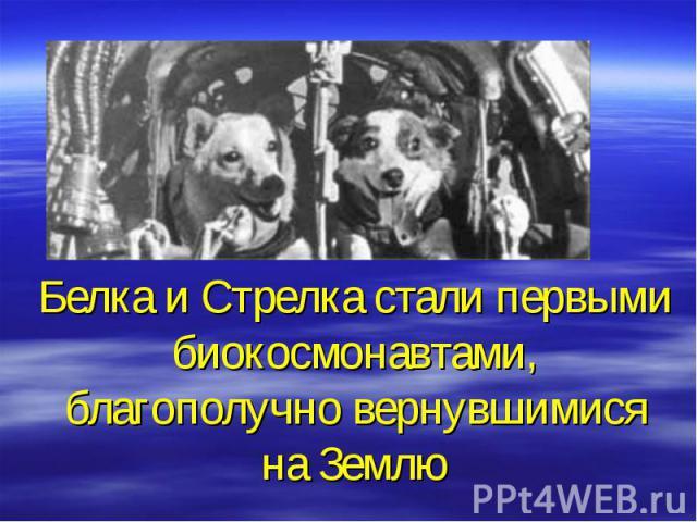 Белка и Стрелка стали первыми биокосмонавтами, благополучно вернувшимися на Землю