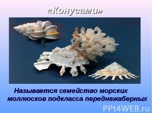 Называется семейство морских моллюсков подкласса переднежаберных Называется семе