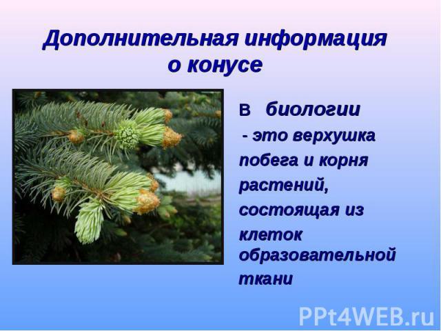 В биологии - это верхушка побега и корня растений, состоящая из клеток образовательной ткани