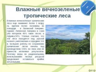 Влажные вечнозеленые тропические леса еще занимают более 1 млрд. га, причем боле