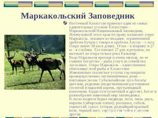 Восточный Казахстан приютил один из самых удивительных уголков Казахстана – Марк